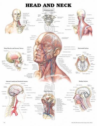 Как сделать нервы железными